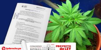 Foto de una planta de cannabis con la portada del proyecto ley y logo de LP