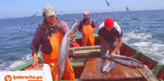 Jurisprudencia constitucional pesquero con logo de LP