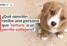 Que sancion recibe una persona que tortura a un perrito callejero