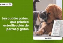 ley-gatos-perros-esterilizacion-LPDERECHO