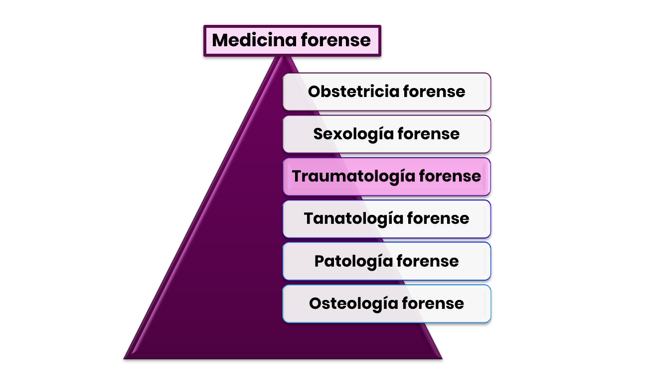 Clasificación medicina forense